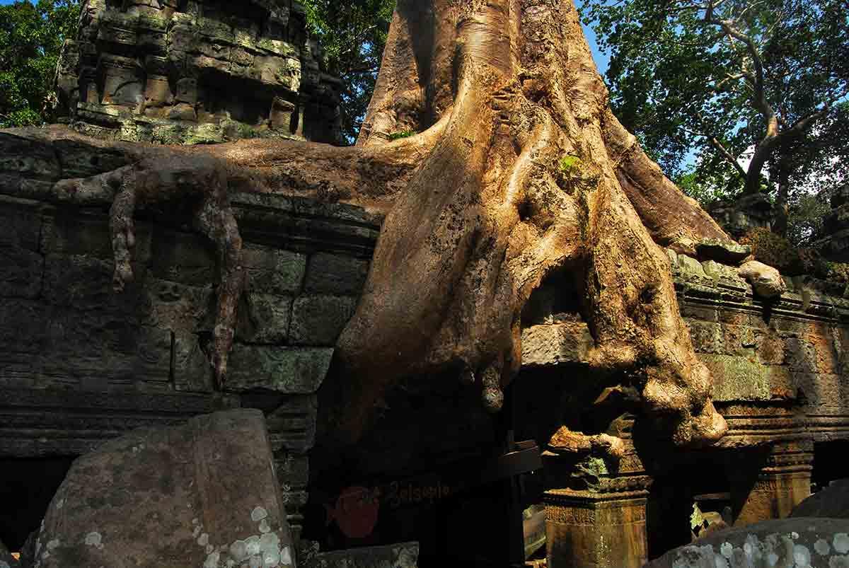 Angkor Wat 11