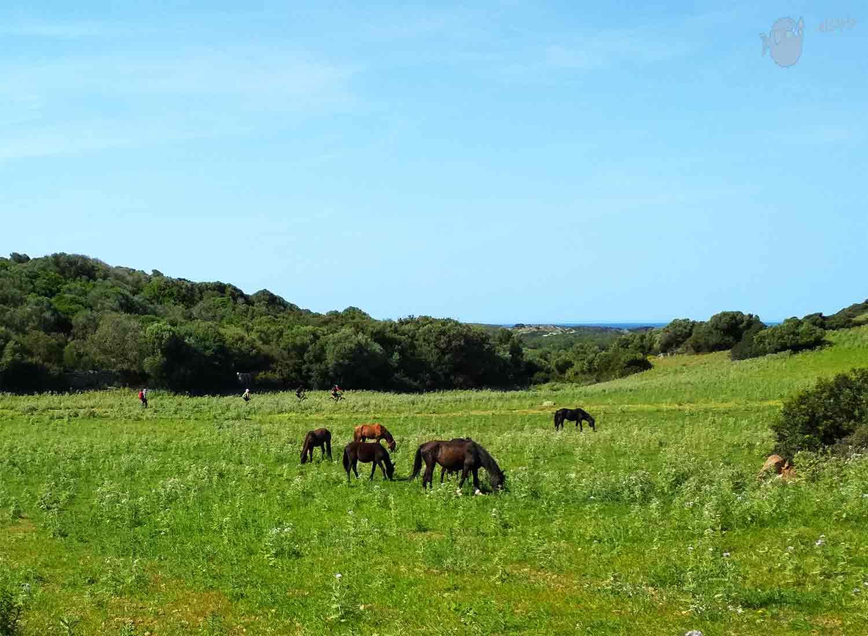 Cavalls, bicis y aventureros