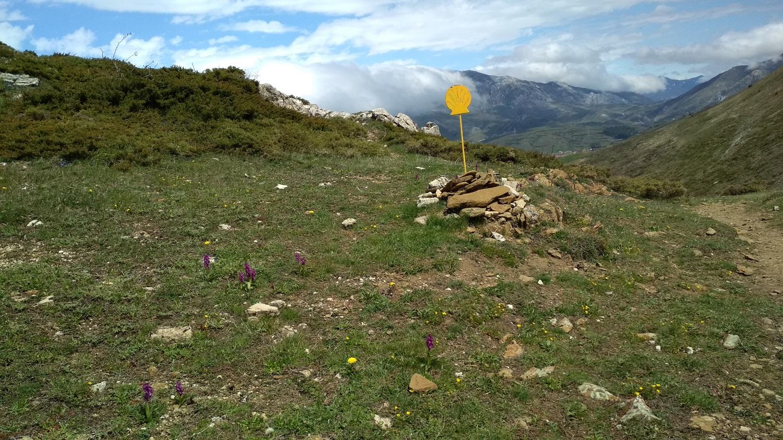 El camino de Santiago 7
