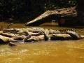 Siesta del caimán