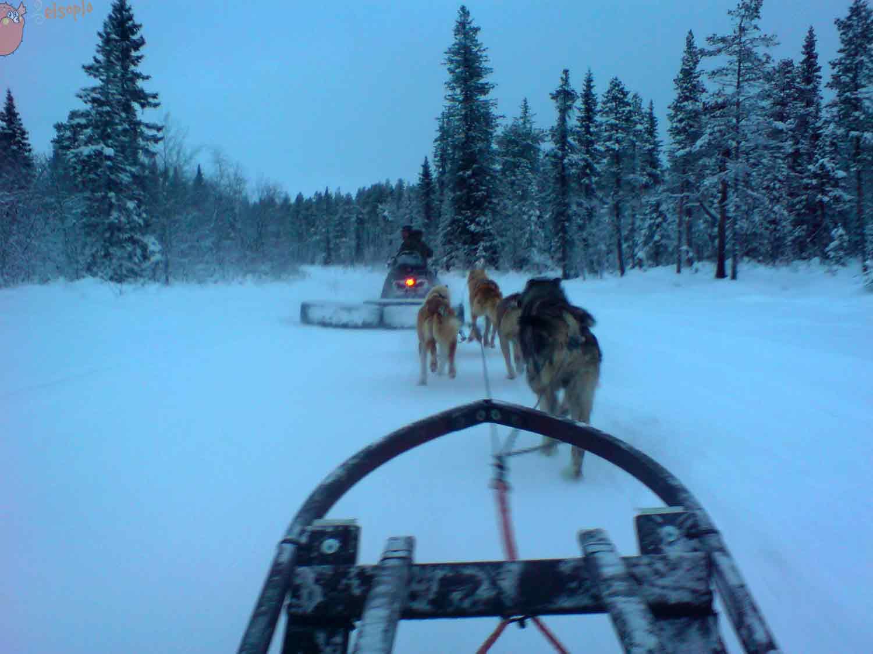 Con huskies al fin del mundo