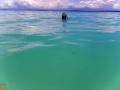 Snorkel en Bocas del Toro