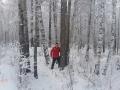 Acorralado en Siberia